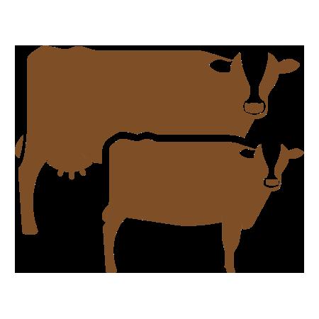 Cow/Calf